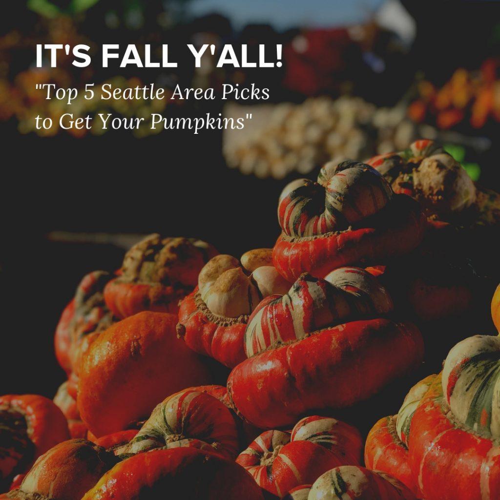 Fall Y'all - insta